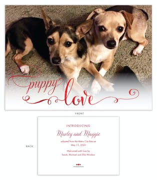 Puppy Love Pet Adoption Photo Announcement