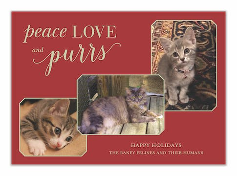 Peace Love and Purrs Holiday Photo Card