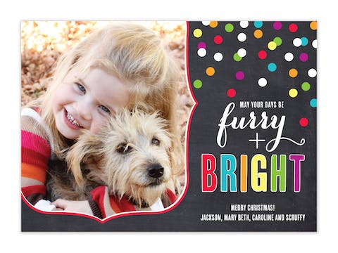 Furry and Bright - Multi-Color Flat Photo Card