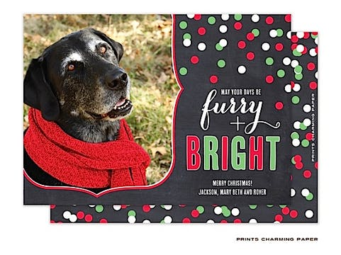 Furry and Bright - Red and Green Flat Photo Card